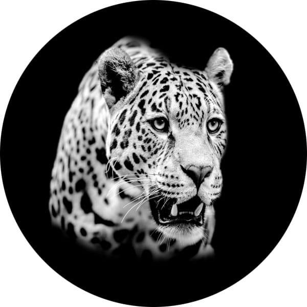 gobo scala di grigio leopardo giaguaro puma animali natura