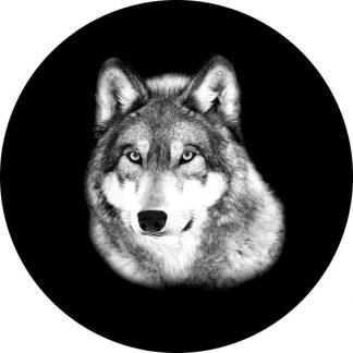 gobo scala di grigio lupo animale natura