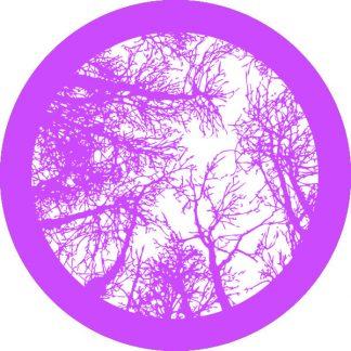 gobo 1 uno un colore alberi foresta bosco natura viola