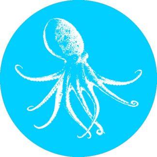 gobo 1 uno un colore polpo animale natura azzurro ciano