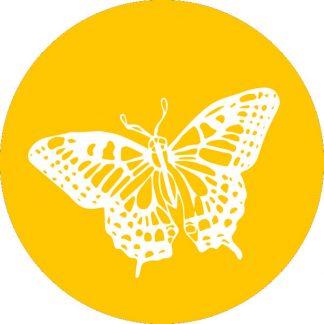 gobo 1 uno un colore farfalla natura animale giallo